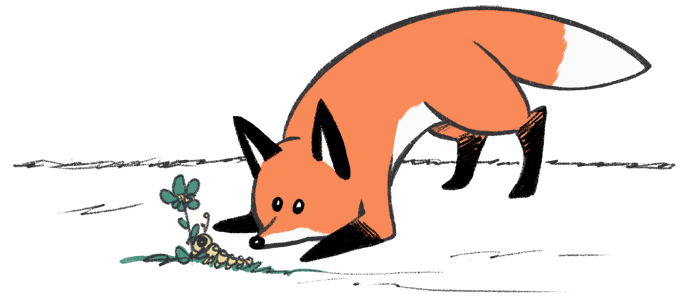 Pencils and Stories fox